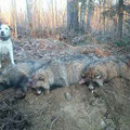 Mit fast 13 Jahren 3 Marderhunde aus einem Bau, super Leistung!!