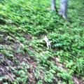 Das steile Gelände kann einen Terrier nicht vom Stöbern abhalten :-)