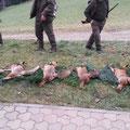24.01.2015, Fuchstreibjagd Lamm: Ich musste die Jagd zwar wegen der Frantschacher Hegeschau, die wir mit den Jagdhornbläsern umrahmten, nach dem 2. Trieb die Jagd verlassen, nach 3 Trieben lagen aber 5 Füchse!