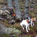 """25.10.2014: Hartes Warten auf das """"Schnallen der Hunde"""" vor einem Rotwildriegler"""