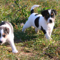 Wilma & Fritzi