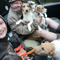 Terrier-Transport :-)