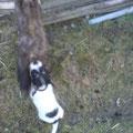 Schon im frühesten Alter haben Rocky die Tiere sehr interessiert :-)