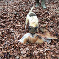 22.02.2015: Verdiente Inbesitznahme des Fuchses :-)