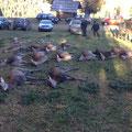 02.11.2014: Ich musste vor der Streckenlegung die Jagd verlassen, es lagen letztendlich 18 Stück Rotwild, 5 Stück Rehwild und 1 Fuchs. Rocky hat einem Schützen einen Hirsch gebracht, Kira hat mir ein starkes Stück Rotwild gebracht, beide super fährtenlaut