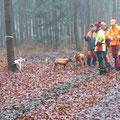 22.&23.11. als Hundeführer bei Drückjagden in Deutschland, tolles Erlebnis, konnte super Hunde- und HF-Leistungen und auch viel Wild sehen, Rocky war nach den 2 Tagen abgefeuert, Kira musste wegen eingetretener Hitze zuhause bleiben