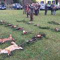 16.11.2014: Treibjagd Sittersdorf als Hundeführer, Strecke waren 2 Füchse, 13 Fasanhahnen, 1 Fasanhenne (Hund), 2 Eichelhäher!