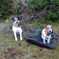 """02.11.2014: Erneutes hartes Warten auf das """"Schnallen der Hunde"""" vor einem Rotwildriegler"""