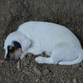 Erde - egal ob trocken oder feucht - haben´s richtig gern als Schlafplatz... Dementsprechend sehen sie auch aus, die kleinen Schweinderl :-D