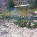 11.11. / Treibjagd Kolm, 1 Fuchs, 16 Hahnen, 3 Hennen. Ich habe einen Hahn erlegen können, leider aufgrund der Bundesstraße daneben kein Einsatz von Hunden möglich