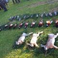 17.11. / Treibjagd Ettendorf, 3 Hasen, 11 Hahnen, 14 Eichelhäher. Rocky hat gestöbert, Kira war mit am Stand und hatte riesige Freude mit dem Hasen, den ich erlegen konnte