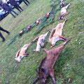 18.11. / Treibjagd Sittersdorf: Super Strecke: 1 Frischling, 3 Füchse, 1 Hase, 5 Hahnen, 1 Henne (von Hund geschnappt), 2 Schnepfen, 1 Eichelhäher