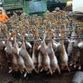15.11.2014: Treibjagd Auggenthal mit einer Strecke von 86 Hasen, 5 Fasanhahnen, 1 Eichelhäher und 1 Rehkitz (Hunde). Mein Beitrag waren 4 Hasen und 1 Fasanhahn! Rocky und Kira durften den ganzen Tag jagen wie die Verrückten :-)