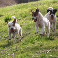 Tucker, Paloma und Fritzi (Rocky-Tochter Ain't She Sweet Anything Goes)