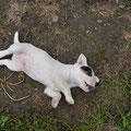 Gleich noch so ein Schweinderl :-)