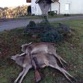 19.12.2014: Tier und Kalb
