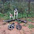 03.10.2013, 18:30: Stockentendoublette. Die Hunde durften wieder die Enten aufstöbern und dann mehrmals apportieren