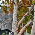 Herbstliche Stimmung im Feriendorf