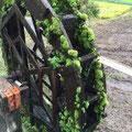 玉ねぎ生産者の農家さんんの庭先[苔付の水車]