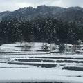 長閑な雪景色②