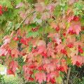 Herbstimpressionen aus Übersee