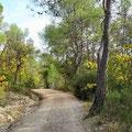 Enger Waldweg beschert uns ...