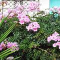 Tropische Pflanzen in den Gärten von Luz.