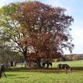 Fohlen auf der Weide - Fohlenhof Sankt Johann