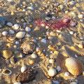 Manta Rota - Muscheln am Strand