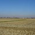 Riesige Felder für Reisanbau.