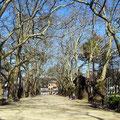 Porto - Allee im Stadtpark.