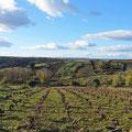 Weinanbau an der Grenze zu Portugal.