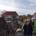 Gegenseitige Faszination - Fohlenhof Sankt Johann
