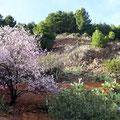 Blühende Mandelbäume vermitteln einen frühlingshaften Eindruck.