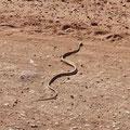 Begegnung mit einer Schlange.