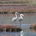 Flamingos in der Lagune bei Nin