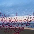 Manta Rota - interessante, korallenartige Wasserpflanze