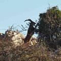 El Torcal - mit etwas Glück sieht man die wilden Bergziegen
