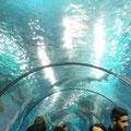 Genial - der Tunnel unter dem Riesenbecken hindurch.