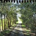 Schleichweg zum Barragem de Alvito.