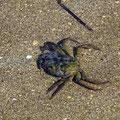 Krabben gab es hier auch ganz viele