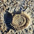 El Torcal - der erste von vielen Ammoniten