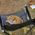 Kaum wird er gefüttert okupiert dieser Kater unseren Sessel ...