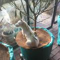 Linda auf Olivenbaum
