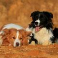 Duke & Lucy Bild von Kathrin Pfundi