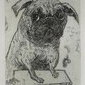 Schmiedel, Robert- Leipzig, Radierung. 2009. Auflage 40. Blatt  220 x 150 mm. Platte 135 x 80 mm. Mein Mops Darwin , 1 Jahr alt. 001