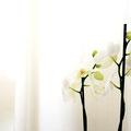 Wiebke Masuch Orchidee