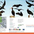Folder für das Waldrappteam, 2014