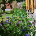 Korenbloemen aan de voorkant van het huis