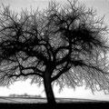 Baum-AKVIS